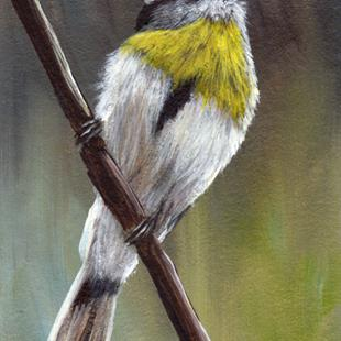 Art: Yellow Breasted Tit ACEO by Artist Janet M Graham