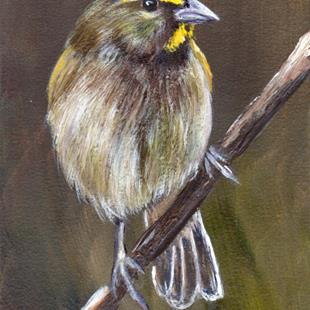 Art: Yellow Faced Grassquit ACEO by Artist Janet M Graham