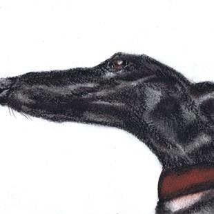 Art: GREYHOUND g913 by Artist Dawn Barker