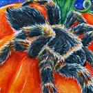 Art: Spider & Pumpkin  (SOLD) by Artist Monique Morin Matson