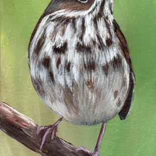 Art: Hermit Thrush ACEO by Janet M Graham by Artist Janet M Graham