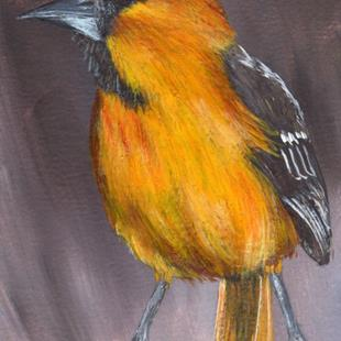Art: Hooded Oriole ACEO by Artist Janet M Graham