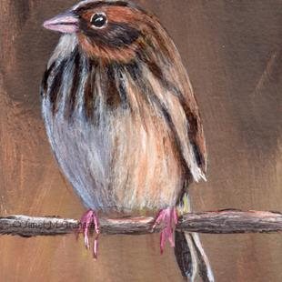 Art: Baird's Sparrow ACEO by Artist Janet M Graham