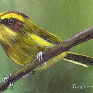 Art: Golden Browed Warbler ACEO by Artist Janet M Graham