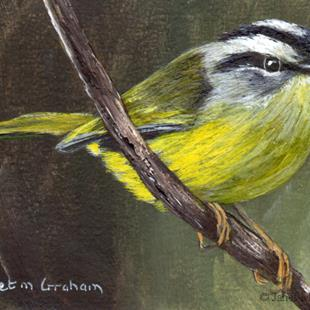 Art: Three Banded Warbler ACEO by Artist Janet M Graham
