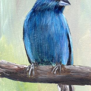 Art: Indigo Bunting ACEO by Artist Janet M Graham