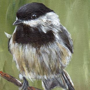 Art: Carolina Chickadee ACEO by Artist Janet M Graham