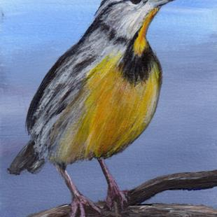 Art: Eastern Meadowlark ACEO by Artist Janet M Graham