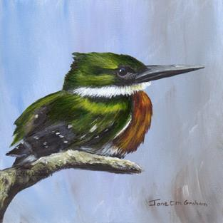 Art: Green Kingfisher by Artist Janet M Graham