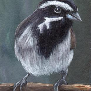 Art: Black Throated Sparrow ACEO by Artist Janet M Graham