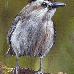 Art: Gray Catbird ACEO by Artist Janet M Graham