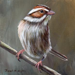 Art: Clay Coloured Sparrow No 2 by Artist Janet M Graham