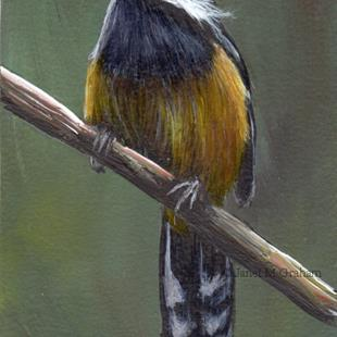 Art: White Eared Sibia ACEO by Artist Janet M Graham