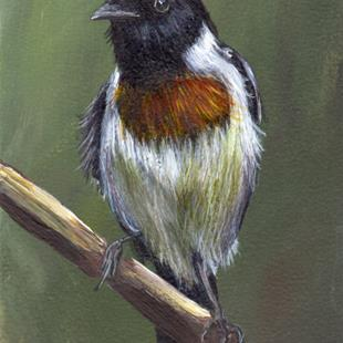 Art: African Stonechat ACEO by Artist Janet M Graham