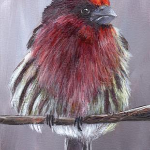 Art: House Finch ACEO by Artist Janet M Graham