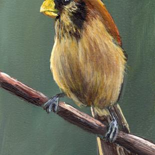Art: Spot Breasted Parrotbill ACEO by Artist Janet M Graham