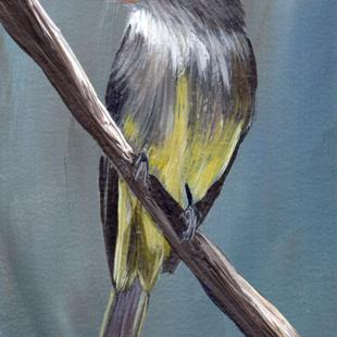 Art: Eastern Wood Pewee ACEO by Artist Janet M Graham