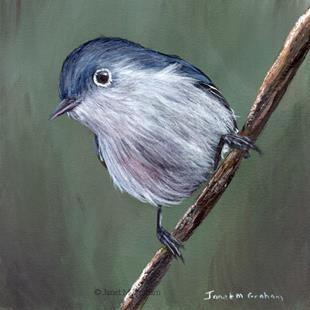 Art: Blue Gray Gnatcatcher by Artist Janet M Graham