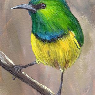 Art: Collared Sunbird ACEO by Artist Janet M Graham