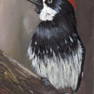 Art: Acorn Woodpecker ACEO by Artist Janet M Graham