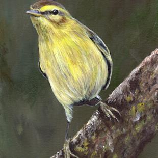 Art: Willow Warbler No 2 by Artist Janet M Graham