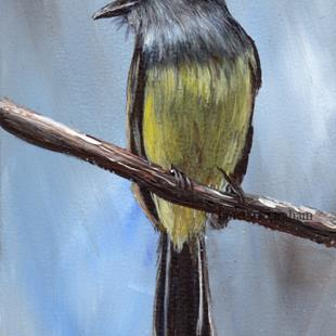 Art: Panama Flycatcher ACEO by Artist Janet M Graham