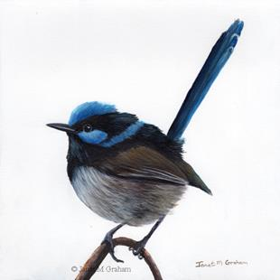 Art: Superb Fairy Wren No 10 by Artist Janet M Graham