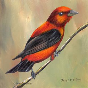 Art: Scarlet Tanager by Artist Janet M Graham