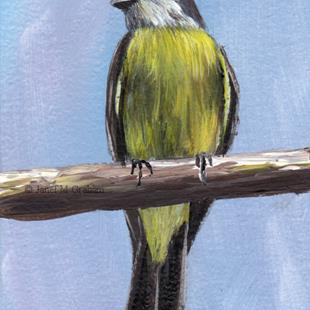 Art: Tropical Kingbird ACEO by Artist Janet M Graham