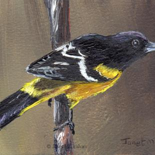 Art: Scott's Oriole ACEO by Artist Janet M Graham