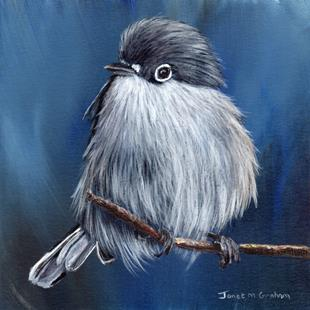 Art: Black Capped Gnatcatcher by Artist Janet M Graham