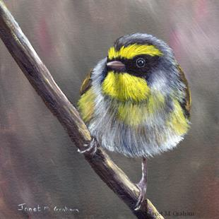 Art: Black Faced Warbler by Artist Janet M Graham