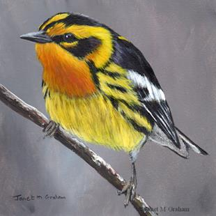 Art: Blackburnian Warbler No 2 by Artist Janet M Graham