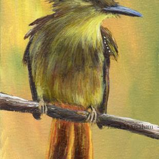 Art: Royal Flycatcher ACEO by Artist Janet M Graham