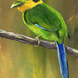 Art: Long Tailed Broadbill ACEO by Artist Janet M Graham
