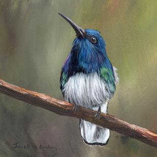 Art: White Necked Jacobin by Artist Janet M Graham