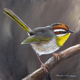 Art: Rufous Capped Warbler No 5 by Artist Janet M Graham