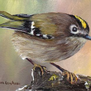 Art: Goldcrest ACEO by Artist Janet M Graham