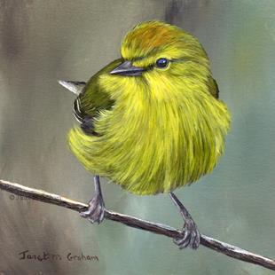 Art: Orange Crowned Warbler by Artist Janet M Graham