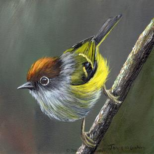 Art: Chestnut Crowned Warbler by Artist Janet M Graham