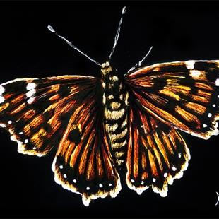 Art: Butterfly  (SOLD) by Artist Monique Morin Matson