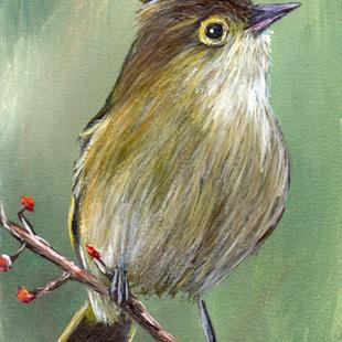 Art: White Crested Elaenia ACEO by Artist Janet M Graham