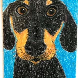 Art: Jake the Dachshund ACEO by Artist Pamela Godwin Manning