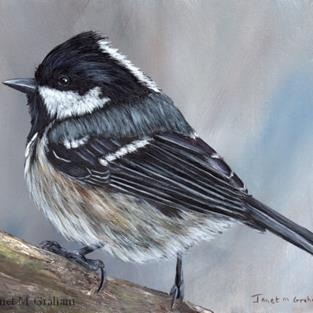 Art: Coal Tit No 3 by Artist Janet M Graham