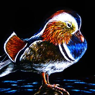 Art: Mandarin Duck  (SOLD) by Artist Monique Morin Matson