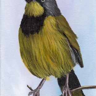 Art: Bokmakierie ACEO by Artist Janet M Graham