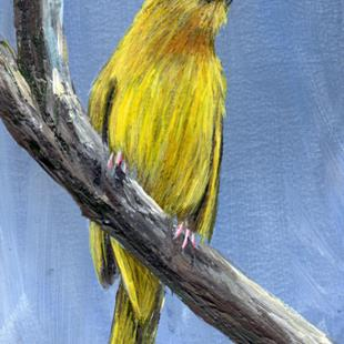 Art: Yellow Weaver ACEO by Artist Janet M Graham