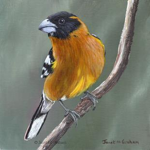Art: Black Headed Grosbeak No 2 by Artist Janet M Graham