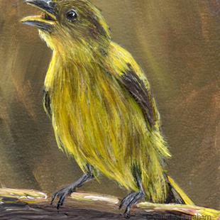 Art: Yellow Backed Tanager ACEO by Artist Janet M Graham
