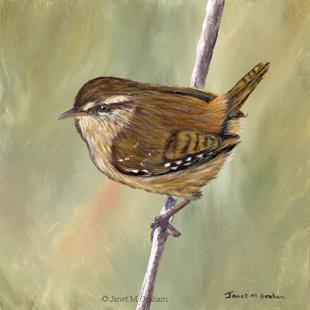 Art: Wren by Artist Janet M Graham